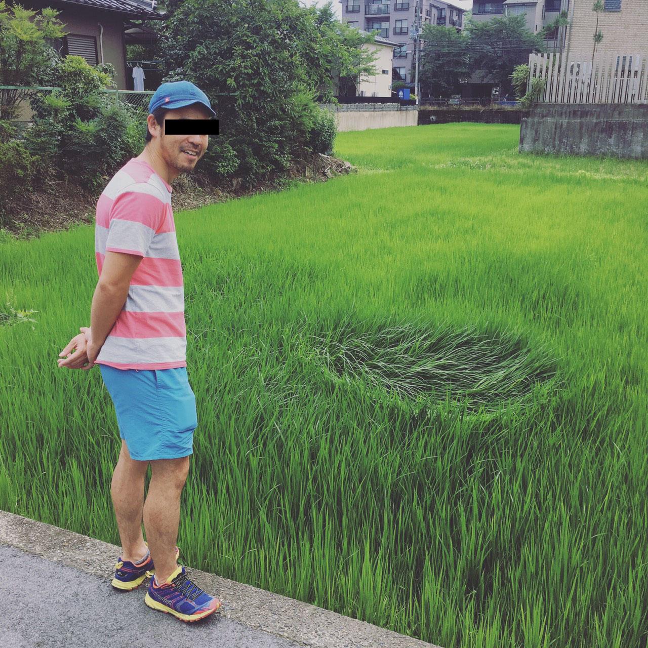 京都 岩倉 田んぼにミステリーサークル